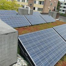 Solar-sedum-systeem-rieken-groendaken-en-zonuzon